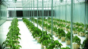 9 Tips To Maximize Your Greenhouse Vegetable Market Potential