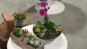 New Plants, Products, And Trends From TPIE 2016