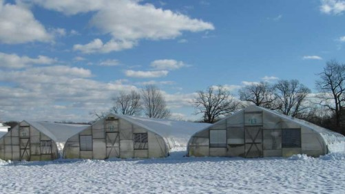 Tips To Help Reduce Wind And Snow Damage At Your Greenhouse