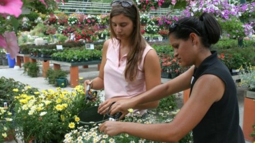 Horticulture Is All About Connections