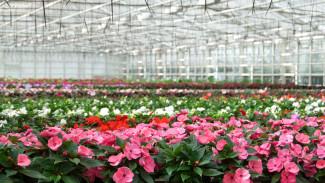 Keep plant shrink minimized