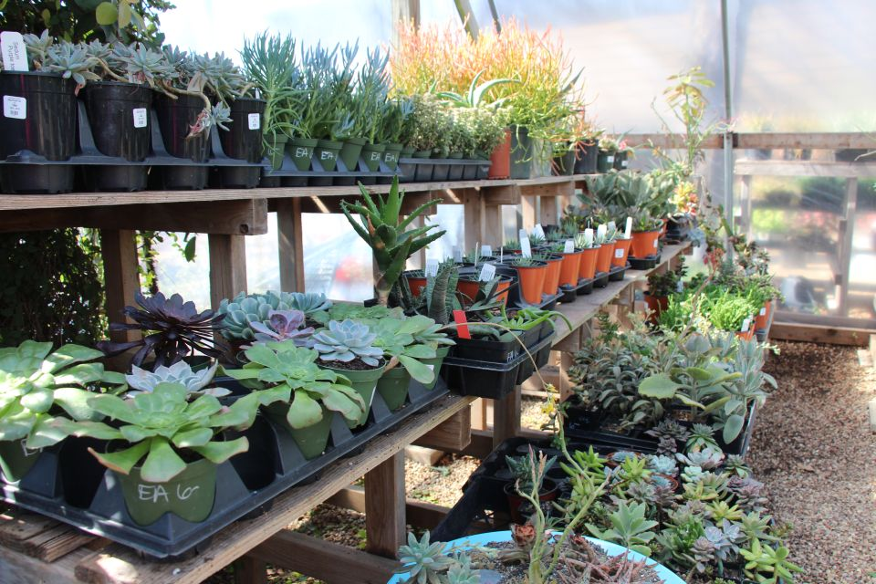 Tour Redentas Garden Shops A Small Eco Friendly Store