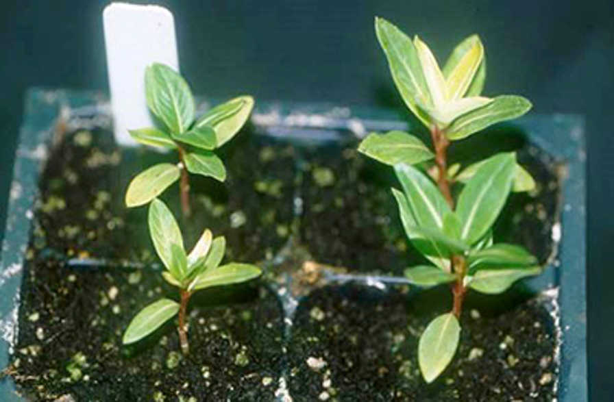 How To Identify Different Root Rots In The Greenhouse