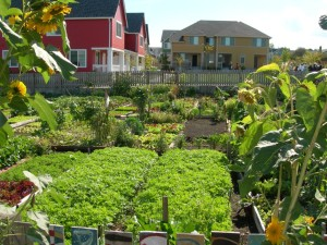 Community Garden free image FEATURE