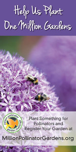 Million pollinator banner sample purple flowe alium
