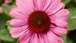 """New """"Generations Of Flowers"""" Study Tracks How And Why Consumers Are Buying Flowers And Plants"""