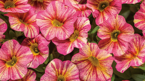 New Plant Varieties Rock, And Here's Why