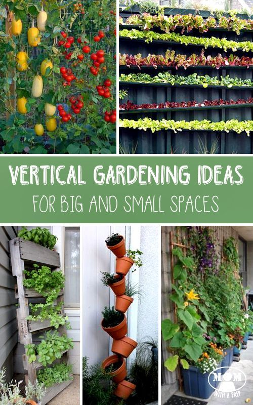Vertical Gardening Ideas For Big And Small Spaces Pinterest pin