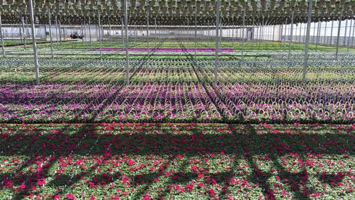 Young's Plant Farm Obtains MPS-A Qualification