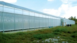 Learn the Basics of Biofilm in the Greenhouse