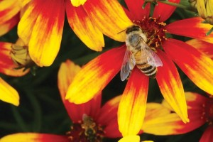 Bee on Bidens