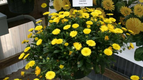 Dr. Allan Armitage Names His Top 6 Picks From GroLink And Windmill Nursery At California Spring Trials 2016