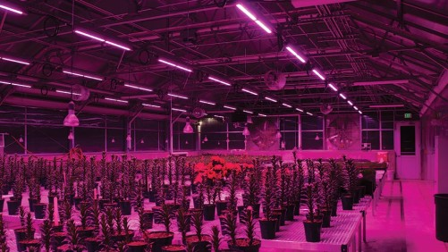 New Report Highlights Potential Energy Savings of LEDs for Greenhouse Growers