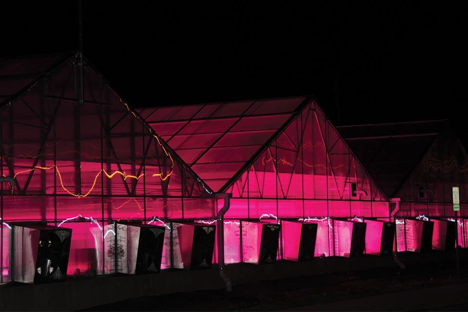 Night shot of CSU Greenhouse