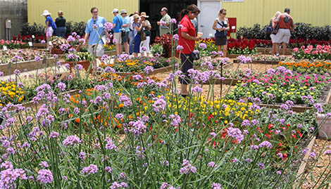 Mark Your Calendars For Florida Flower Trials In May