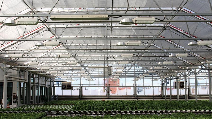 Gotham Greens Atrium Style Greenhouse Chicago