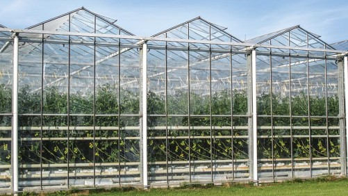 How To Fine-Tune Your Greenhouse Cooling And Ventilation Systems