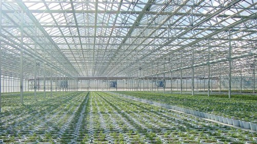 Light Matters In Greenhouse Structures