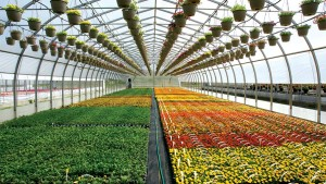 The Latest Developments In Greenhouse Structures