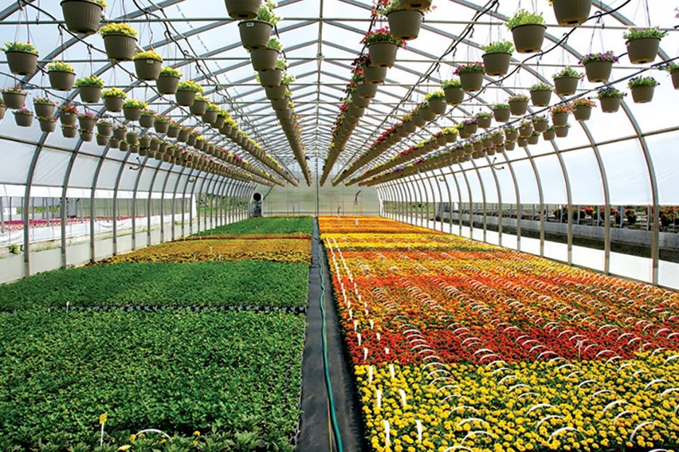 the latest developments in greenhouse structures greenhouse grower