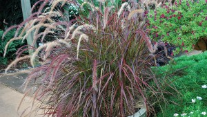 Why Ornamental Grasses Are Great For People In Condos And Apartments