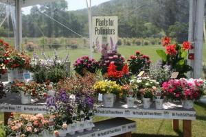 Plants for Pollinators display