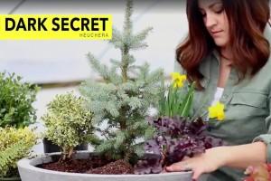Spring Fairy Garden Video Screenshot