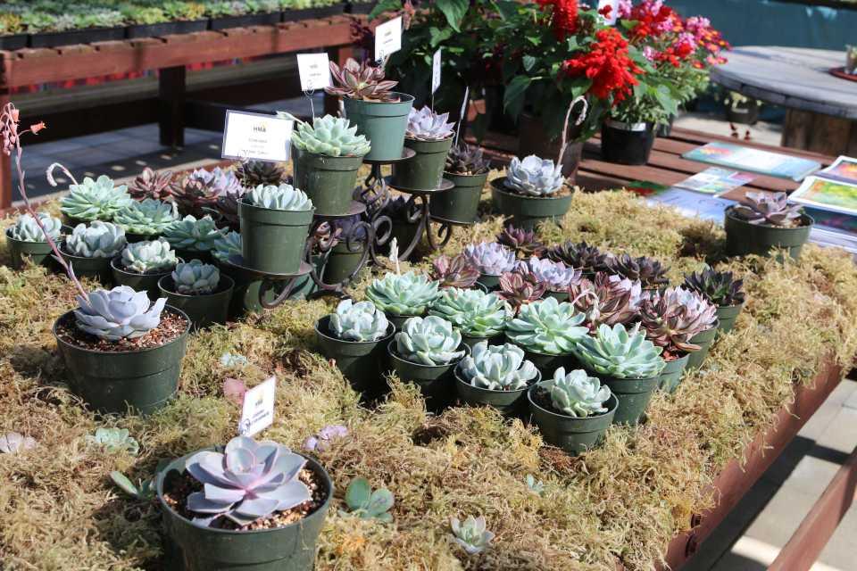Succulents At HMA