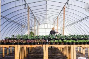 Sustane-Research-Greenhouse-2015