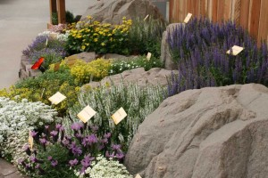 Syngenta Perennials are now open to the market