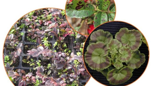 University of Florida Online Greenhouse Training Courses