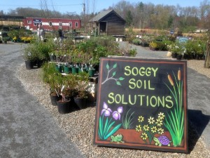 wet area plants sign at Weston Nurseries
