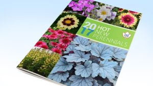Eason Horticultural Resources Releases New Perennials Guide And Spring Trials Report