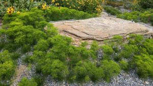 13 New Native Plants And Nativars For Going Green [Slideshow]