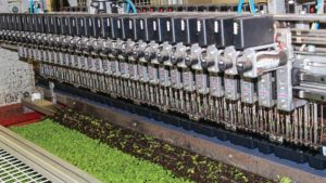 Automation Generates Sustainable Efficiency At Green Circle Growers