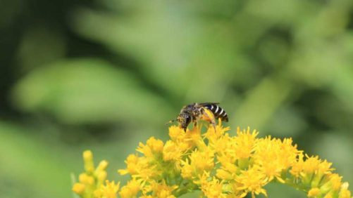 Scotts Miracle-Gro Foundation Partners on New Parks for Pollinators Campaign