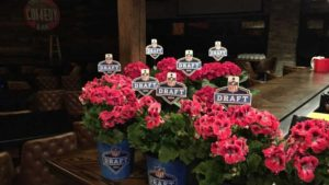 Sporticulture's NFL-Themed Plants Featured At 2016 NFL Draft In Chicago