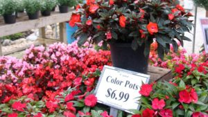 Bench sign with price for color pots at Graf Growers