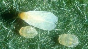 Vestaron Planning For More Research And Development Of New Bioinsecticides