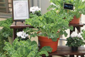 Prizm Kale (Syngenta Flowers)