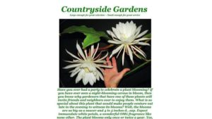 Old Fashioned Marketing Still Works At Countryside Gardens