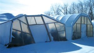 Protect Your Greenhouse From The Worst Disasters