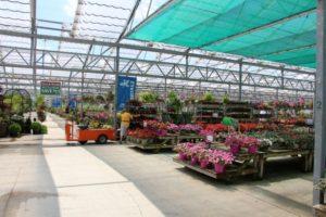 Stocking spring plants at Petitti Garden Center
