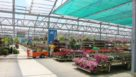 Stocking spring plants at Petitti Garden Center FEATURE