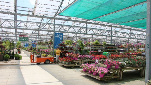 Captivating Greenhouse Grower