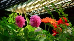 Indoor Gardening Program, Modern Homesteading, Will Launch At Cultivate'16
