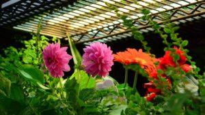 Sunlight Supply lighting for indoor growing