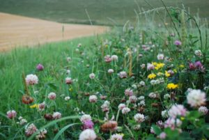 meadow, biodiversity