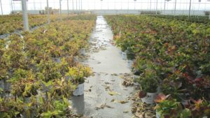 Select The Right Filter For Ebb-And-Flood Irrigation