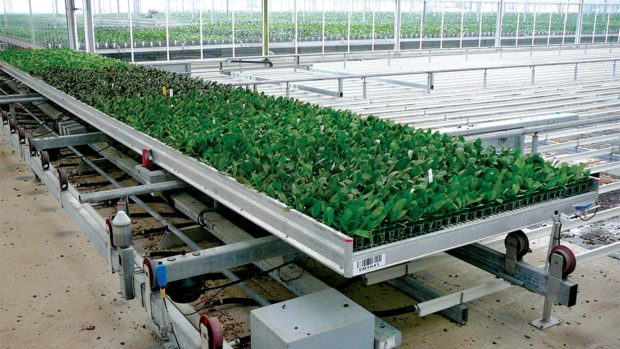 Floricultura Bench Pulling System